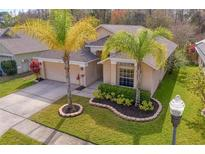 View 14338 Moon Flower Dr Tampa FL